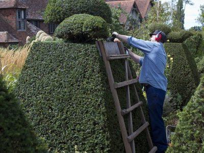 topiary-898927_640